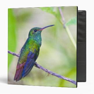 Suramérica, Costa Rica, Sarapiqui, selva del La