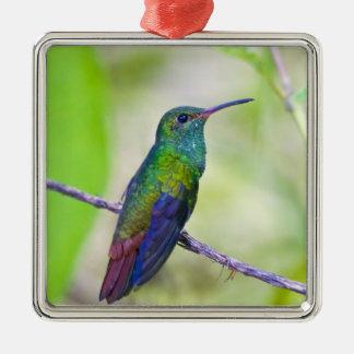 Suramérica Costa Rica Sarapiqui selva del La Ornamento Para Arbol De Navidad