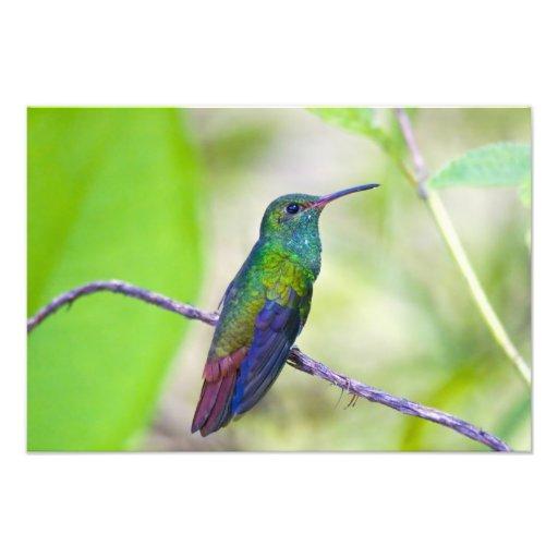 Suramérica, Costa Rica, Sarapiqui, selva del La Cojinete