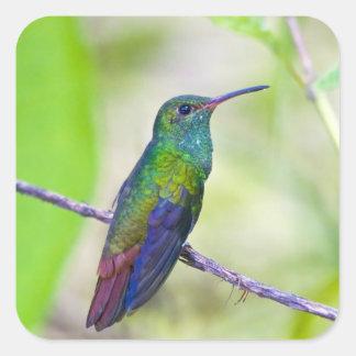 Suramérica, Costa Rica, Sarapiqui, selva del La Colcomanias Cuadradases
