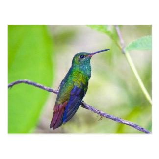Suramérica, Costa Rica, Sarapiqui, selva del La Tarjeta Postal