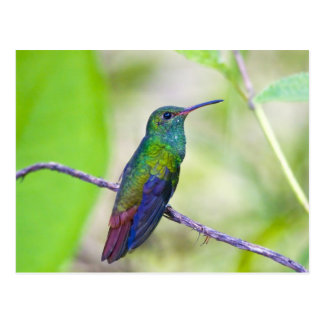 Suramérica, Costa Rica, Sarapiqui, selva del La Postales