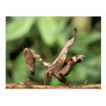 Suramérica, Ecuador, el Amazonas. Mantis religiosa Tarjetas Postales