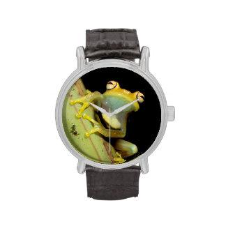Suramérica, Ecuador, el Amazonas. Rana arbórea Reloj