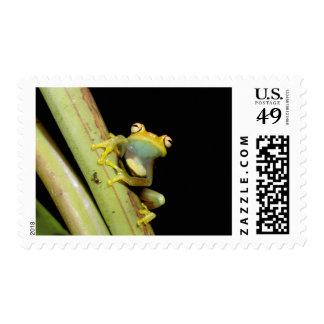 Suramérica, Ecuador, el Amazonas. Rana arbórea Sellos