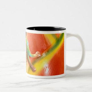Suramérica, Ecuador, el Amazonas. Rana arbórea Tazas De Café