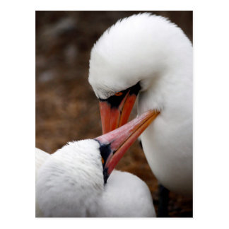Suramérica, Ecuador, islas de las Islas Galápagos. Postales