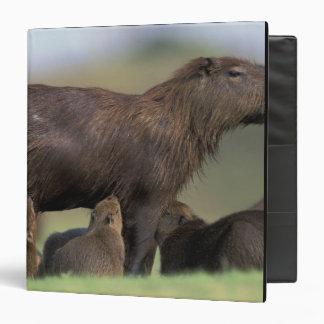 "Suramérica, el Brasil, Capybara de Pantanal Carpeta 1 1/2"""