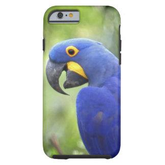 Suramérica, el Brasil, Pantanal. En peligro Funda Resistente iPhone 6