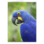 Suramérica, el Brasil, Pantanal. En peligro Tarjetón
