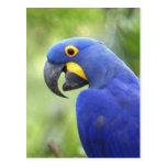 Suramérica, el Brasil, Pantanal. En peligro Tarjeta Postal