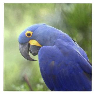 Suramérica, el Brasil, Pantanal. Los 2 en peligro Azulejos Ceramicos