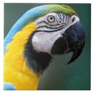 Suramérica, el Brasil, parque de Iguacu Natioanl, Azulejo Cuadrado Grande