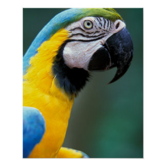 Suramérica el Brasil parque de Iguacu Natioanl Poster