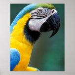 Suramérica, el Brasil, parque de Iguacu Natioanl, Póster