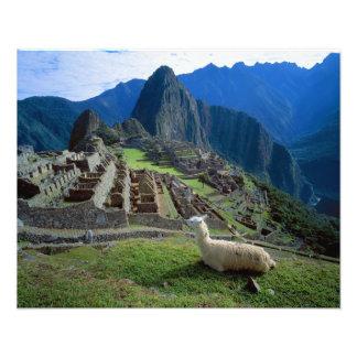 Suramérica, Perú. Una llama descansa sobre una col Fotografía