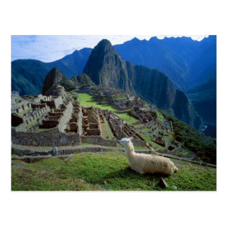 Suramérica Perú Una llama descansa sobre una col Tarjeta Postal