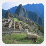 Suramérica, Perú. Una llama descansa sobre una Pegatina Cuadrada