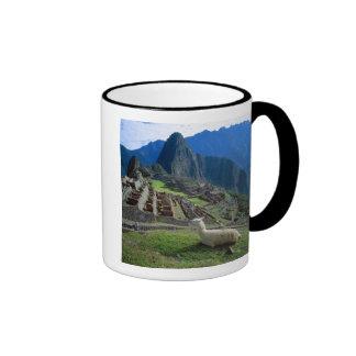 Suramérica, Perú. Una llama descansa sobre una Taza A Dos Colores