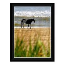 Surf Horse Postcard