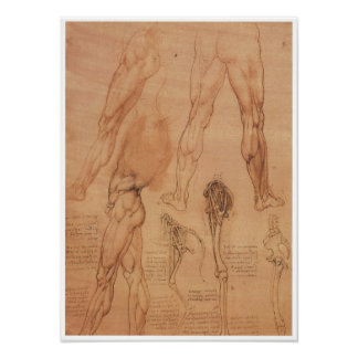 Surface Anatomy of the Lower Extremity, Da Vinci Poster