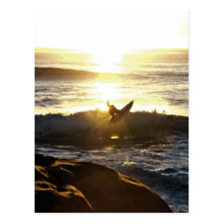 Surfer in San Diego Postcard