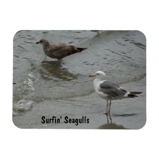 Surf'in Sea Gulls at Port San Luis, California Vinyl Magnet