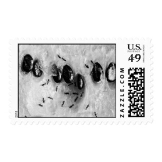 surfing ants postage