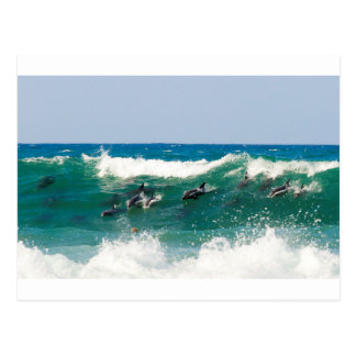 Surfing dolphins postcard