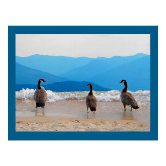 Surf's Up! - Geese Poster