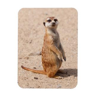 suricate rectangular photo magnet