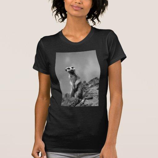 Suricate T Shirts