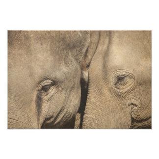 Surin Elephant Round Up, Surin Elephant Show Photo Print