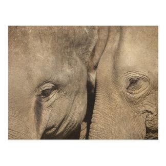 Surin Elephant Round Up, Surin Elephant Show Postcard