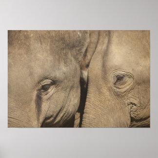 Surin Elephant Round Up, Surin Elephant Show Poster