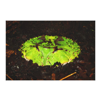 Surinam Horned Frog Ceratophrys Cornuta Canvas Print