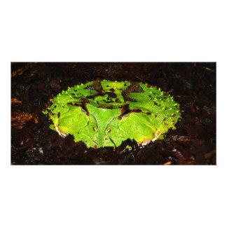 Surinam Horned Frog Ceratophrys Cornuta Card