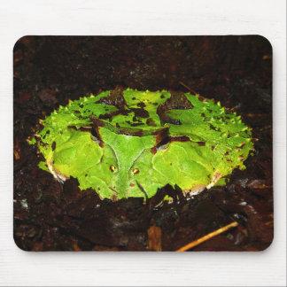 Surinam Horned Frog Ceratophrys Cornuta Mouse Pad