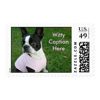 Surprised Boston Terrier Postage Stamps