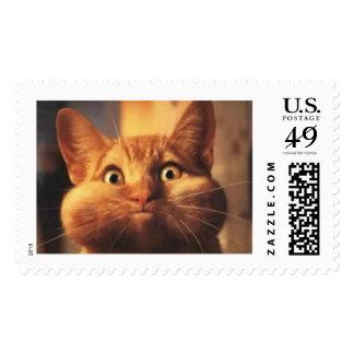 Surprised Cat Postage Stamp