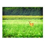 Surprised, deer in the fields Lomo Post Card