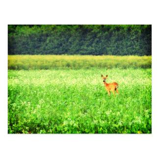 Surprised deer in the fields Lomo Post Card