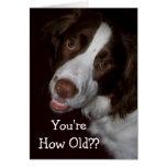Surprised English Springer Spaniel Birthday Greeting Card