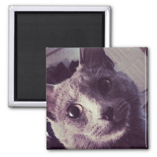 Surprised Gray Cat funny 2 Inch Square Magnet