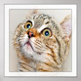 Surprised Kitten Face print