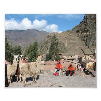 surprised llama at Ollantaytambo, Peru Photo