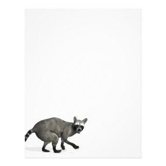 Surprised Raccoon Letterhead