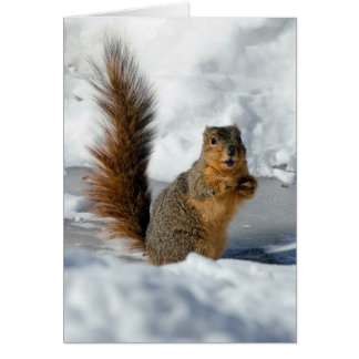 Surprised Squirrel Card