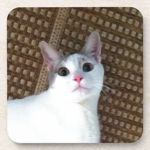 Surprised White Cat Drink Coasters