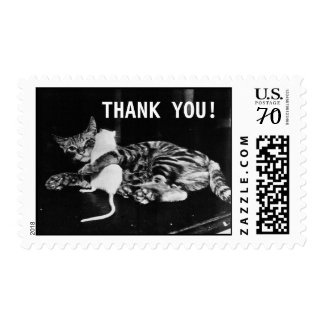 Surprising Friendship Cat and Mouse | Thank You Postage